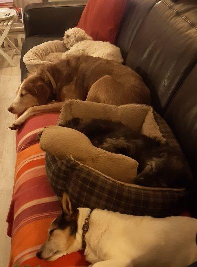 Hondenopdebank4